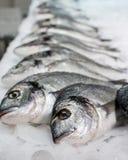 Sea fish on ice Stock Photos