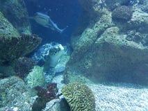 sea turtle and shark stock image