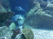 sea turtle and shark stock images