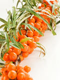 Sea ​​buckthorn Stock Photography