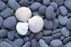 Sea ��shells Stock Photo