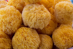 Sea ​​sponge detail in round shape Royalty Free Stock Image