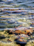 Sea. Reef Seabed seen through shallow water Royalty Free Stock Photo