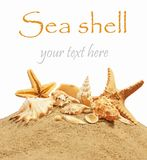 Sea. Shell on the beach royalty free stock image