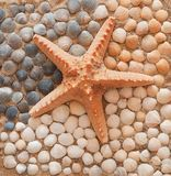 Sea. Composition of starfish and shells on the beach royalty free stock photography