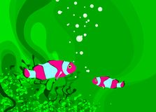 Sea. Two fish in the coral riff clown fish green background Royalty Free Stock Photography