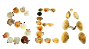 Sea. Shells written word  on a white background Royalty Free Stock Photography