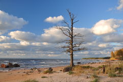By the sea. A dead tree by the sea stock images