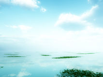 The Sea. A image of a calm and still scenic seascape or lake background. With some plants floating on the surface Stock Image