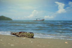 Sea acorn colony on a brown glass bottle dumped pollute at the sand beach,blurred sea and blue sky in background,filtered image. Selective focus,light effect Stock Photos