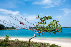 Sea Almond tree with ocean Royalty Free Stock Photography