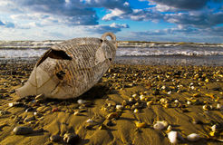 Sea and amphora Royalty Free Stock Photography