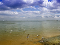 Free Sea And Clouds Beach Stock Image - 20795691
