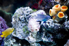 Sea anemone Royalty Free Stock Photo
