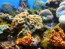 Sea anemone Stock Photography