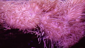 Sea anemone. Beautiful underwater abstract background footage. Sea anemone. Underwater abstract background footage stock video