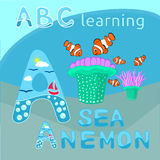 Sea anemone and clownfishes vector, Tropical sea life theme illustration Cartoon sea creatures vector graphic, Sea background ABC Royalty Free Stock Photography