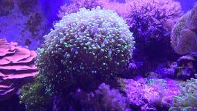 Sea Anemone, Sea Life, Underwater, Nature Stock Photos