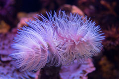 Sea anemone. With vibrant colors royalty free stock images