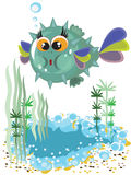 Sea animal fish ball Royalty Free Stock Image