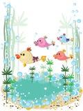 Sea animal,shellsl Royalty Free Stock Photography