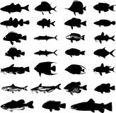 Sea animals fish silhouettes set Royalty Free Stock Image