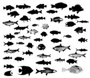 Sea animals fish silhouettes set Stock Image