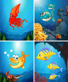 Sea animals living under the ocean Stock Photos