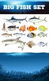 Sea animals and ocean scene. Illustration Royalty Free Stock Photography