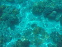 Sea animals and plants. Blue oceanic landscape underwater photo. Royalty Free Stock Images