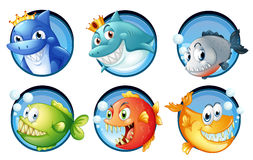 Sea animals on round badges Stock Photography