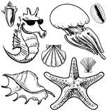 Sea animals and shells collection Royalty Free Stock Images