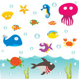 Sea Animals Royalty Free Stock Photography