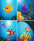 Sea animals swimming in the ocean Royalty Free Stock Photos