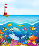 Sea animals swimming under the ocean Stock Photography