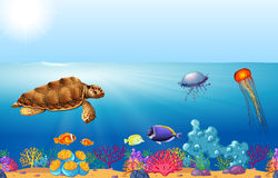 Sea animals swimming under the ocean Royalty Free Stock Image