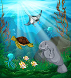 Sea animals swimming under the ocean Royalty Free Stock Photography