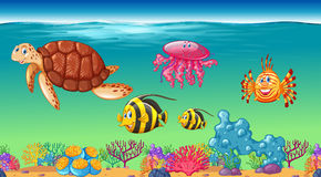 Sea animals swimming under the sea Stock Images