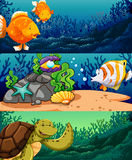 Sea animals under the ocean Stock Photo