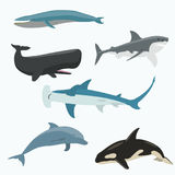 Sea animals vector set. Flat style Royalty Free Stock Photo