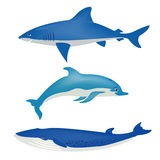 Sea animals on white Stock Photo