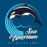Sea Aquarium Emblem with Jumping Killer Whale. Sea Aquarium logo  or Emblem. Jumping Killer Whale against circle of waves. Vector illustration Royalty Free Stock Images