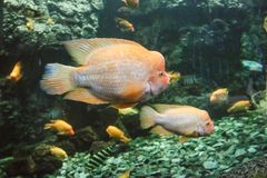 Marine aquarium in Hradec Králové in the Czech Republic. Sea aquarium in Hradec Králové in the Czech Republic stock image