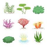 Sea aquatic fauna underwater plants and corals. Vector colorful ocean element Royalty Free Stock Photos