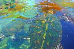 Sea turtle in the aquarium of Eilat. Israel royalty free stock photo