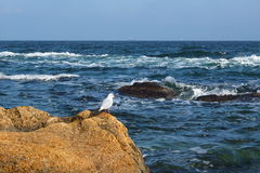 Sea and autumn Stock Photography