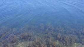 Coral reefs with seaweed underwater at sea bottom on shallow. Sea background with ripples on water surface. Coral reefs with seaweed underwater at sea bottom on stock video