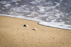 Shells on the sand beach and soft wave of the sea Stock Image