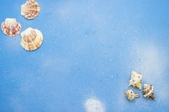 Sea background shells Stock Image