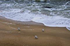 Sea background. Three seagulls on the sand of the beach. Sea background. Three seagulls on the sand of the beach, at the edge of the surf stock photo